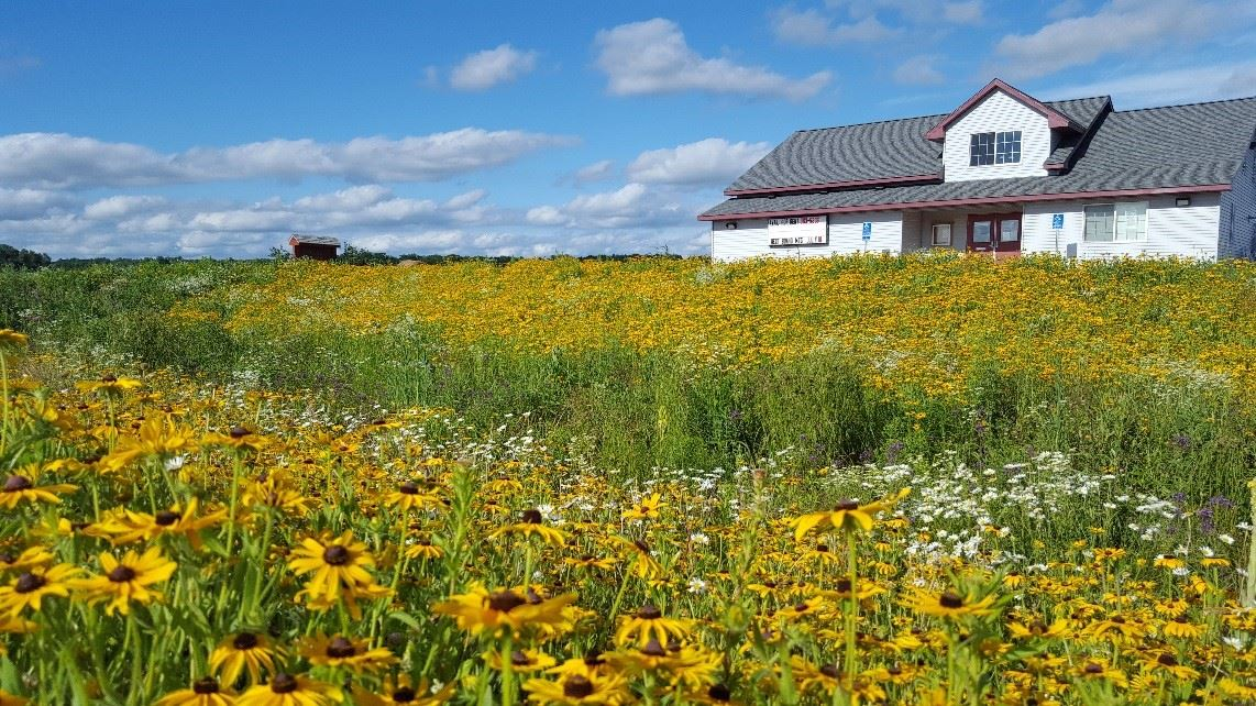 Black-eyed susans in bloom at Page Community Park