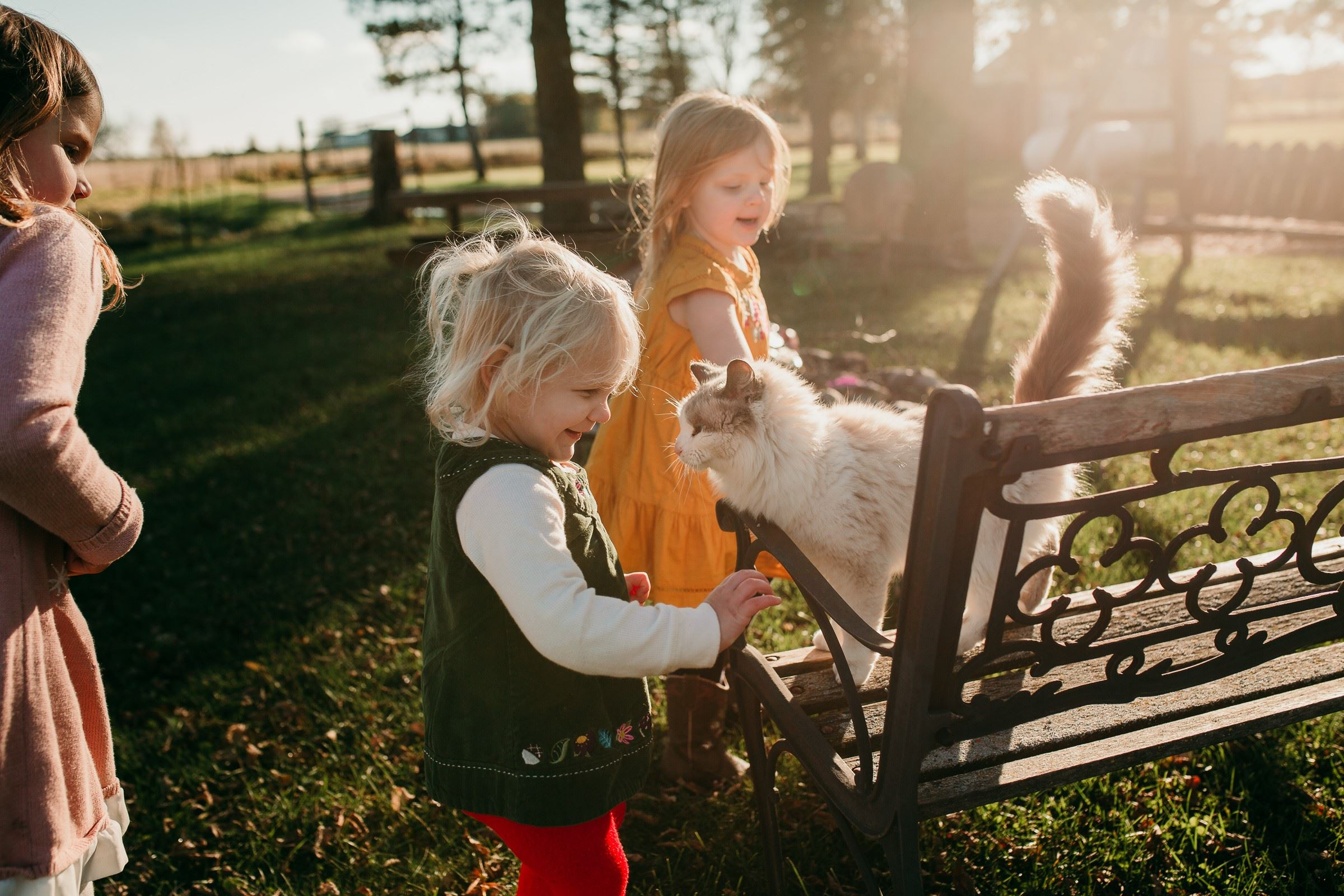 Little girls petting cat.