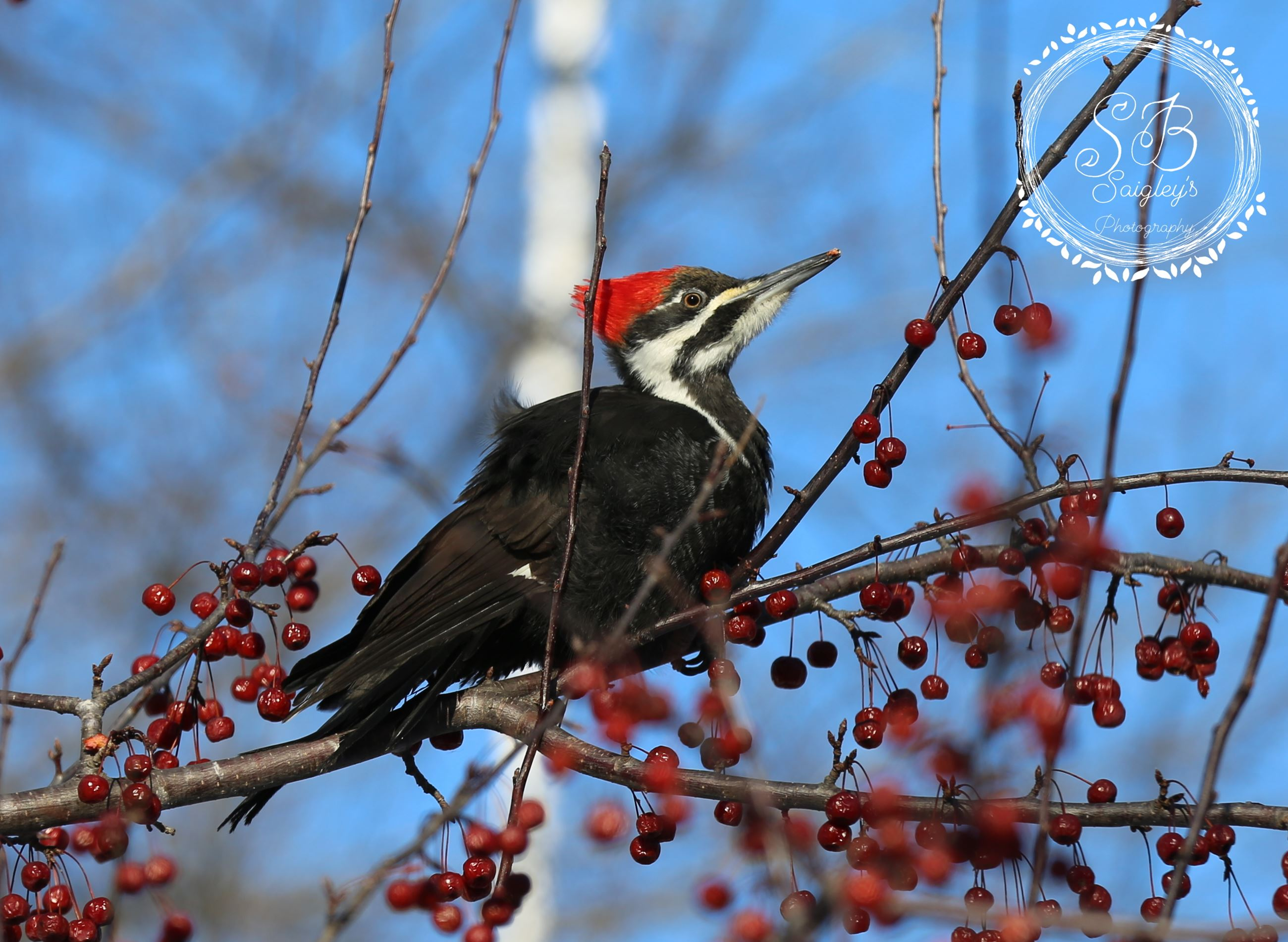 Woodpecker in early spring.
